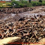 Chodavaram village illegal slaughter house East Godavari District (AP, India): Illegal slaughter in India. Pictures © Animal Rescue Org. Kakinada. Used with permission by 'The Voice of Stray dogs' (www.strays.in)