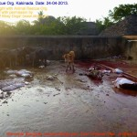 Municipal Slaughter House, Pithapuram, East Godavari District (AP, India): Illegal slaughter in India. Pictures © Animal Rescue Org. Kakinada. Used with permission by 'The Voice of Stray dogs' (www.strays.in)